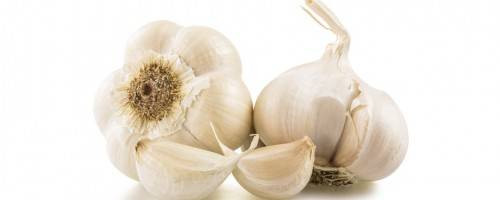 Read Full Article on eat garlic